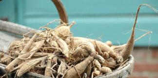 Produkty roślinne coraz częstszą alternatywą na odchudzanie