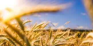 Jak wyselekcjonować odpowiednie środki do zastosowania w rolnictwie